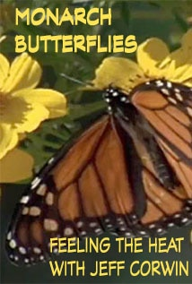 Image of Season 1 Episode 7 Monarch Butterflies