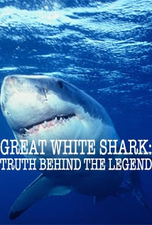 Image of Great White Shark: Truth Behind the Legend