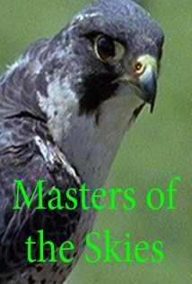Image of Masters of the Skies