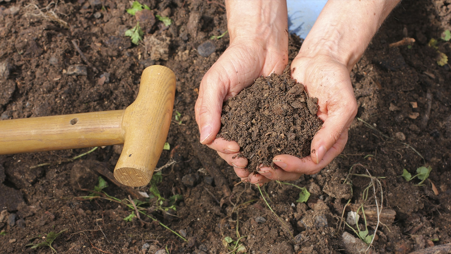 Prepare Healthy Soil and Plant for Spring | The Great Courses Plus