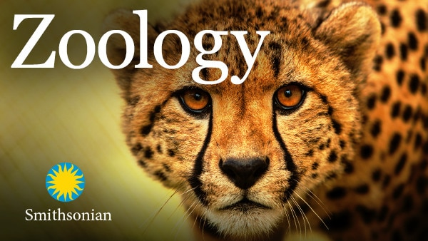 zoology  understanding the animal world