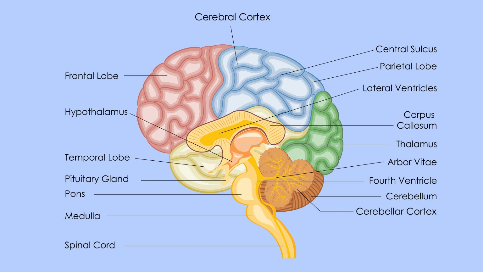 Damaged Brain, Damaged Function | The Great Courses Plus