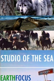 Image of Studio of the Sea