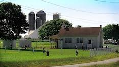 Amish 101