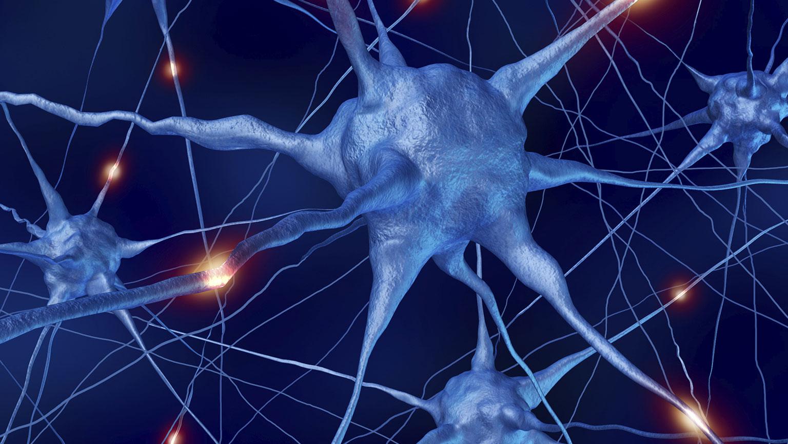 Nervous System—Autonomic Nervous System and Cranial Nerve | The ...