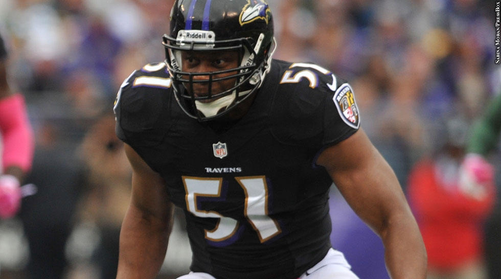 Issue 191: Ravens 2013: Daryl Smith