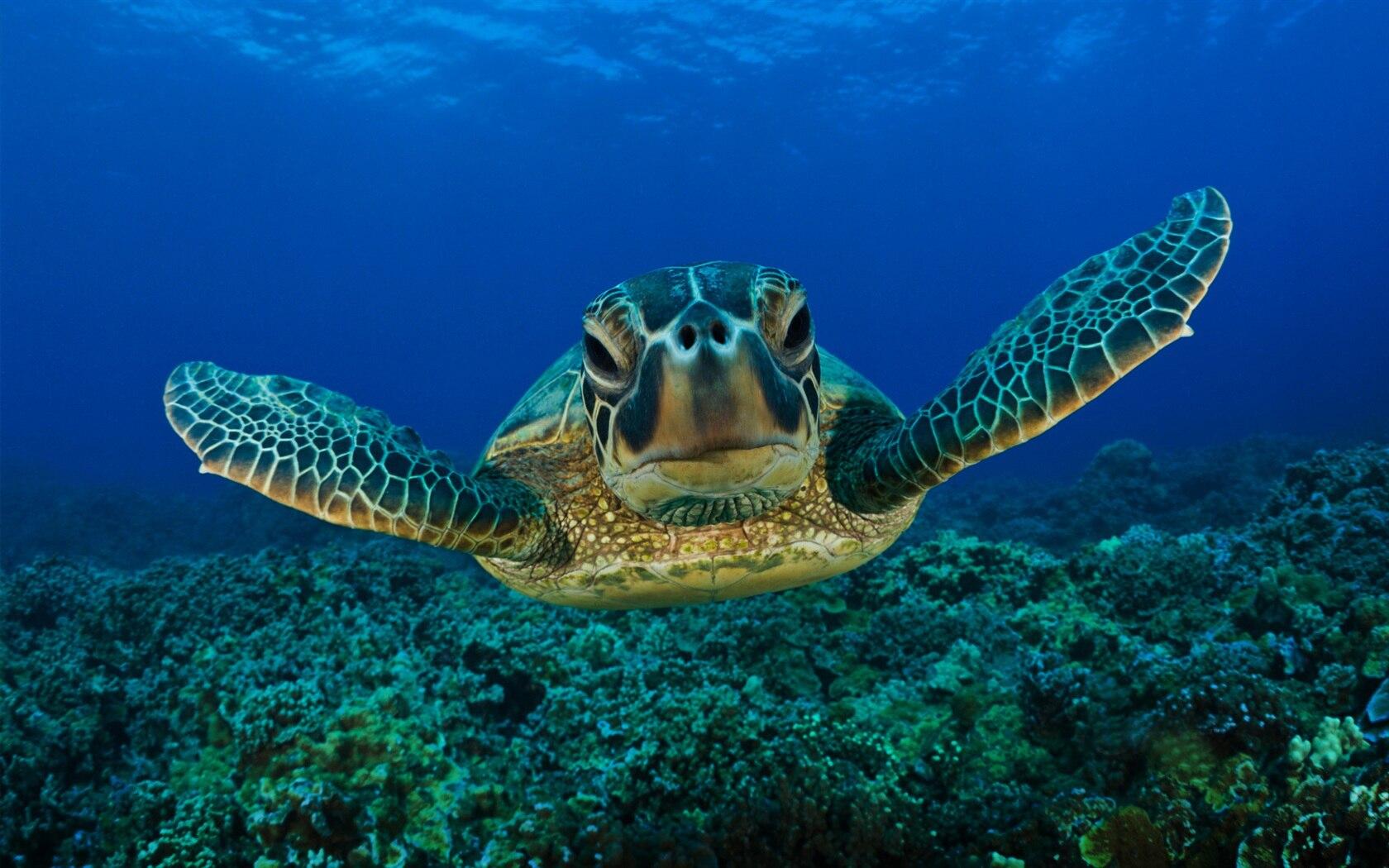 ocean life lessons tes teach