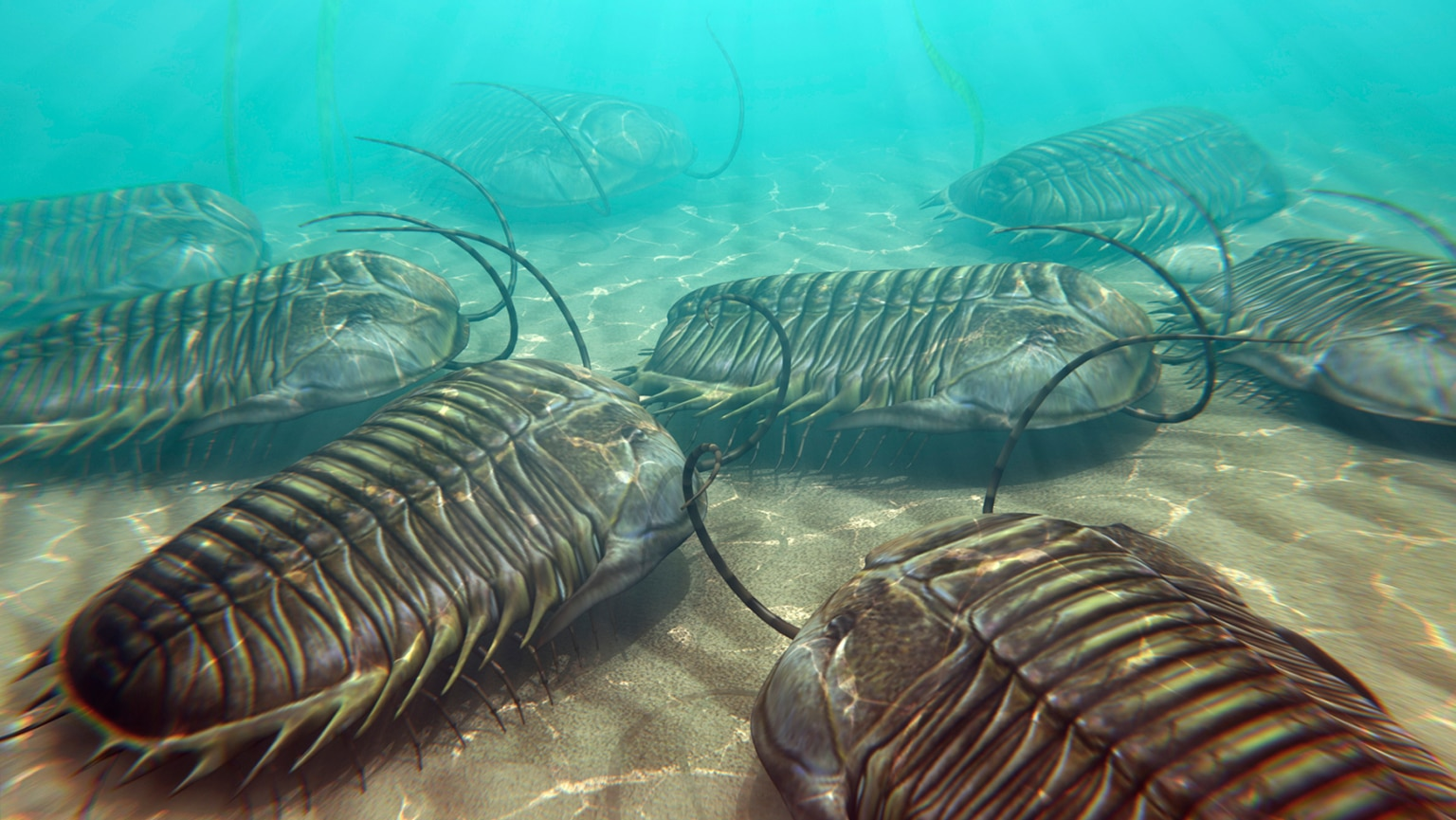 Incredible Variety—The Cambrian Explosion