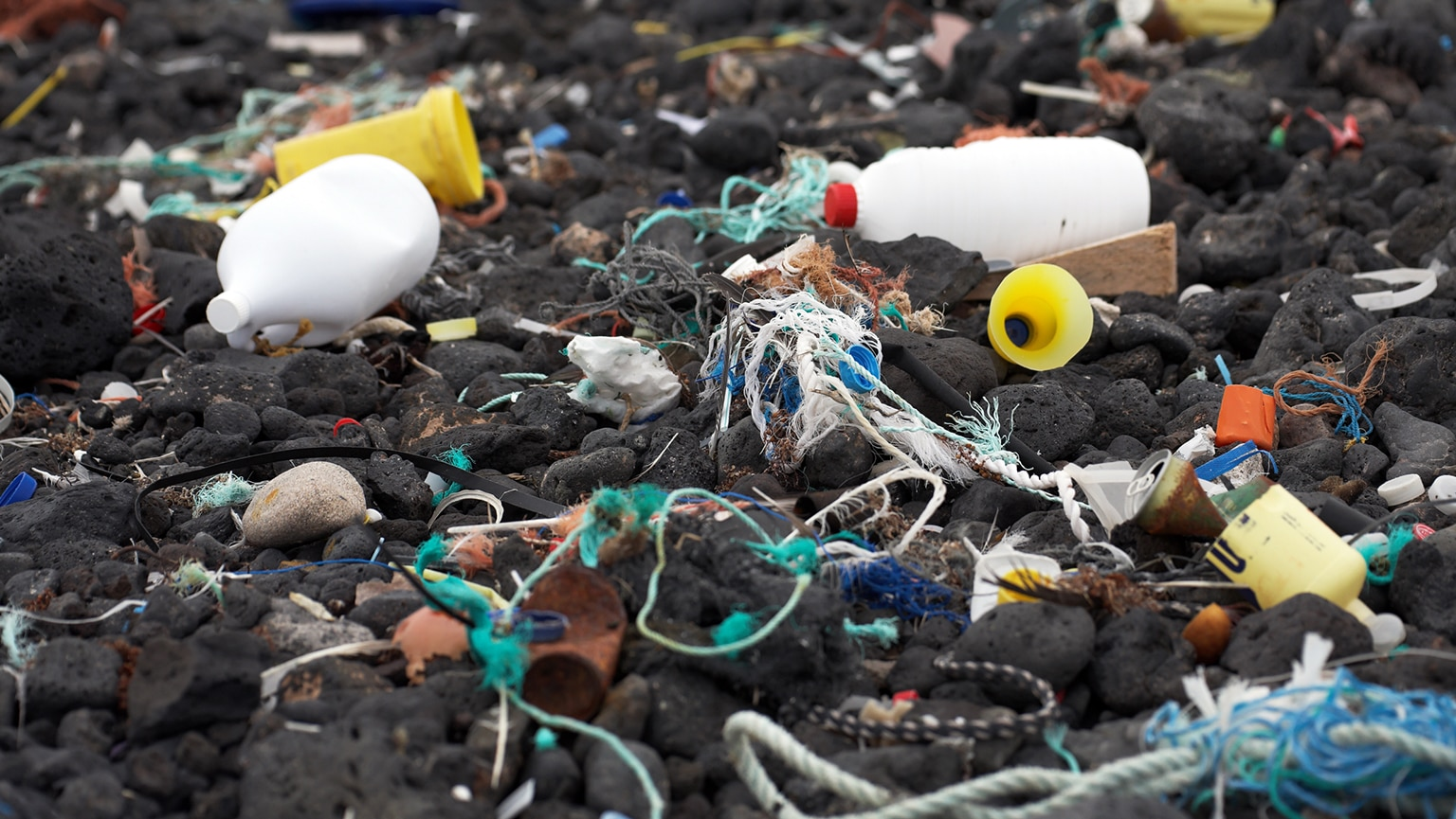 Marine Pollution—The Impact of Toxins