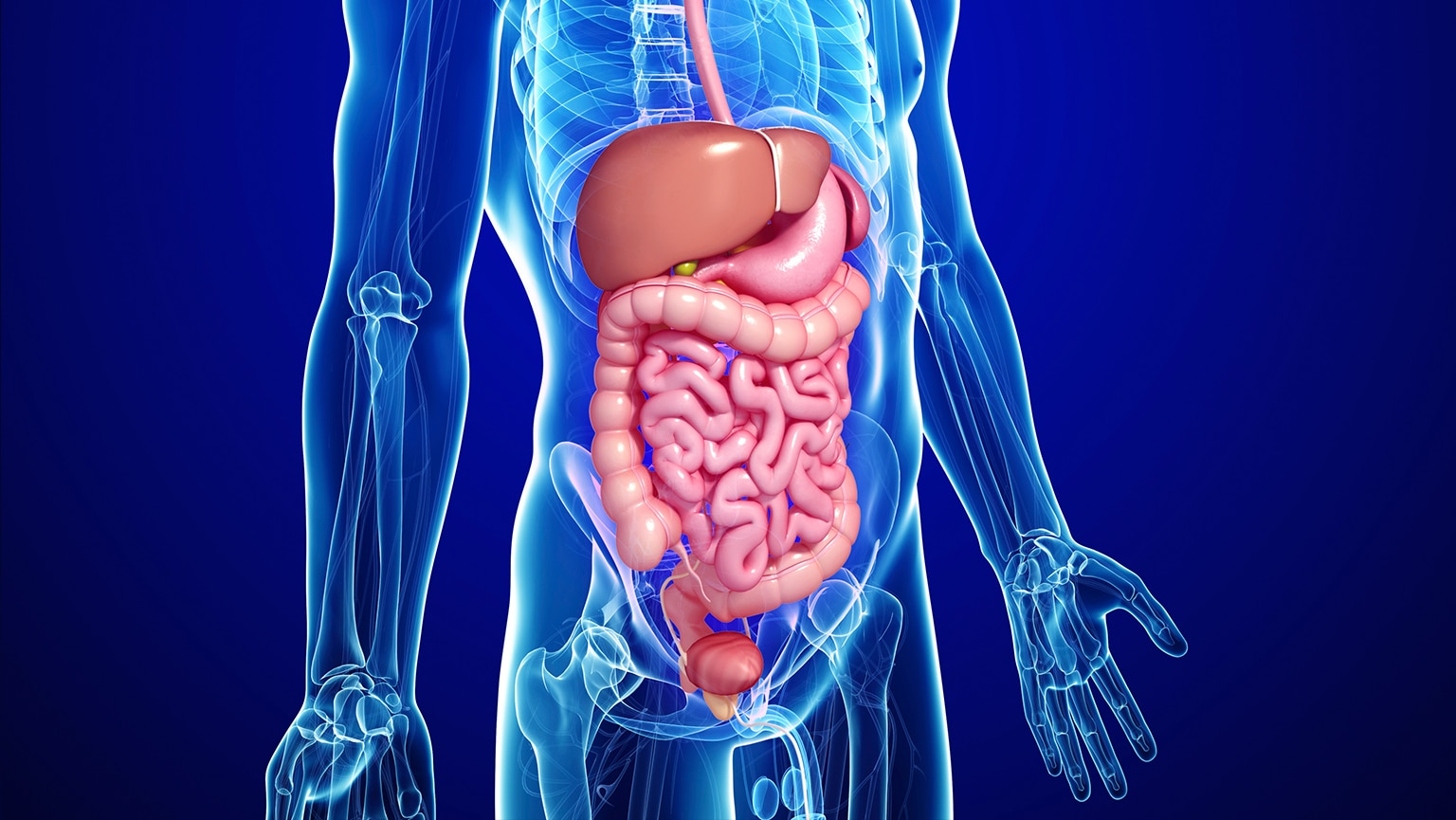 Our Underappreciated Digestive Tract