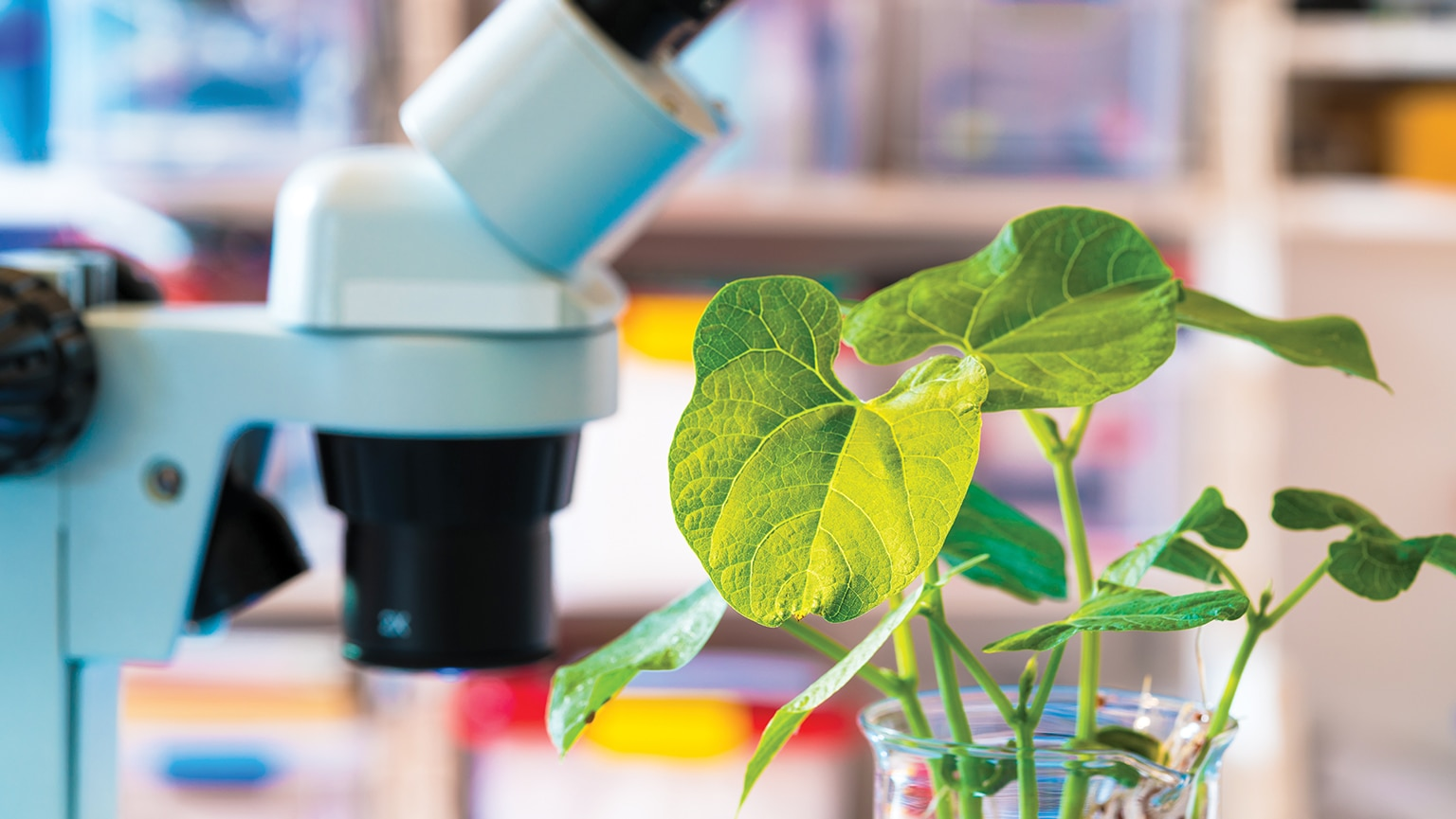Modifying the Genes of Plants