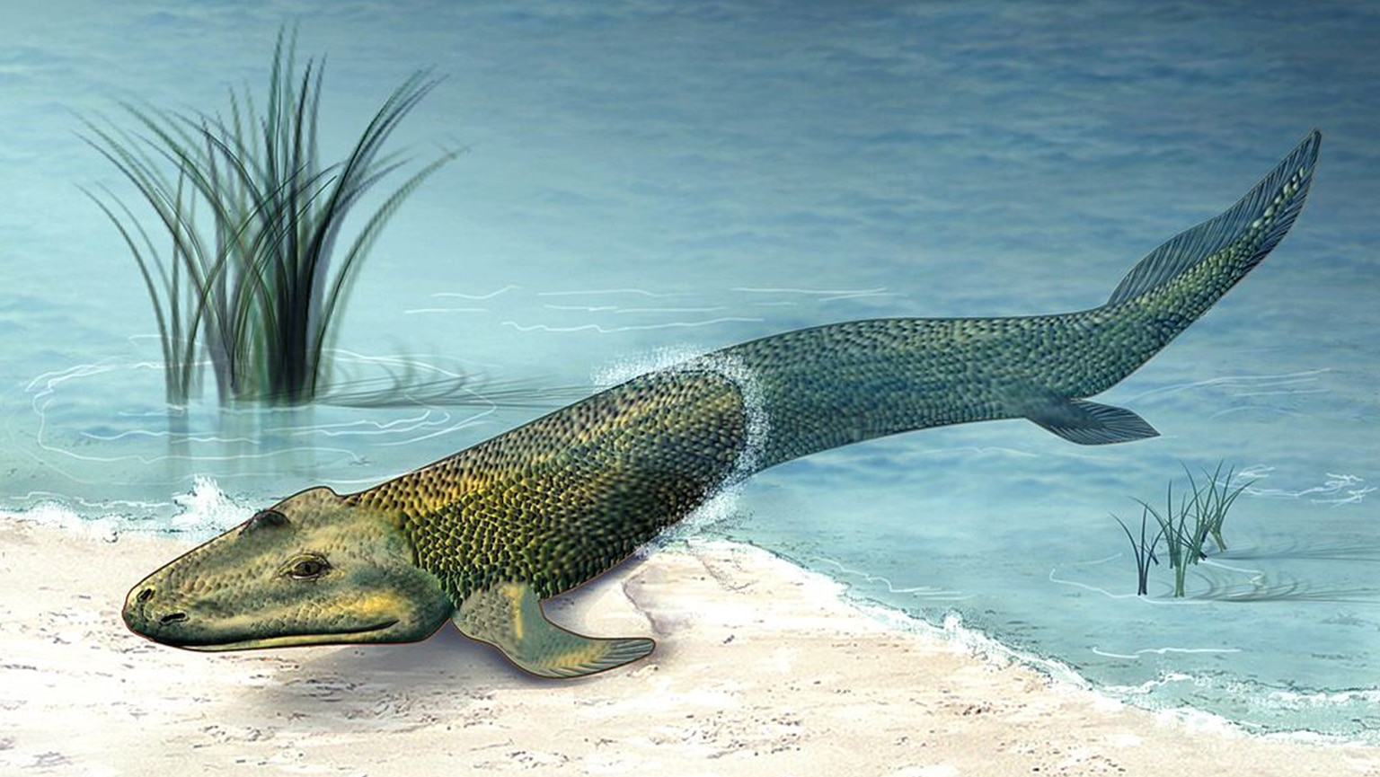 Tiktaalik—The Search for a Fishapod