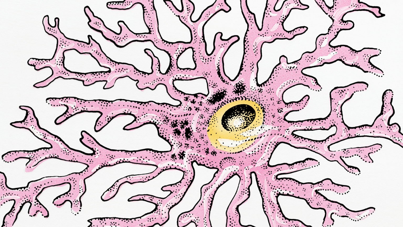 Central Nervous System—Cellular Organization