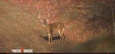 Backwoods Life - My Perfect Deer Hunt