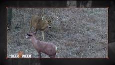 Bowhunter TV - My Perfect Deer Hunt