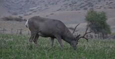 Wyatt Gregory - My Perfect Deer Hunt