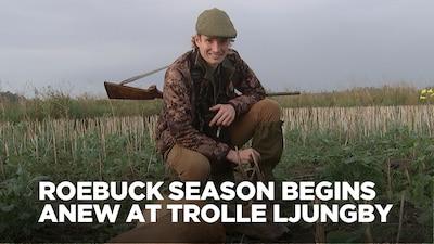 Roebuck Season Begins Anew at Trolle Lungby