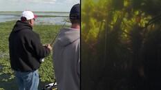 Punching Matted Water Hyacinths