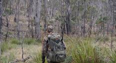 Fallow Buck Season in Tasmania