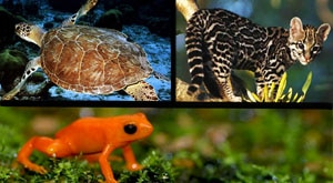 Image of Season 1 Episode 9 Margays, Green Turtles, and Golden Mantella Frogs