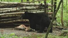 Northwoods Wisconsin Youth Bear Hunt