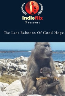 Image of The Last Baboons of Good Hope