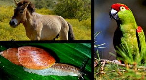 Image of Season 1 Episode 6 Przewalski's Horses, Thick-Billed Parrots and Polynesian Tree Snails