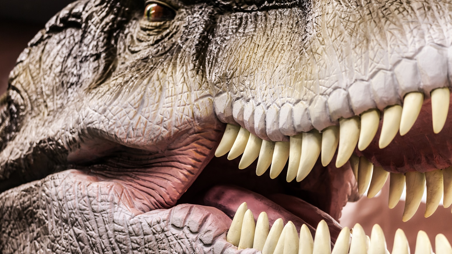 Letting the Dinosaurs Speak—Paleobehavior