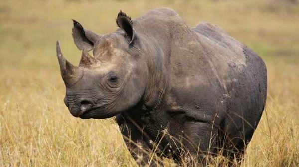 The Rhino's Little Helpers