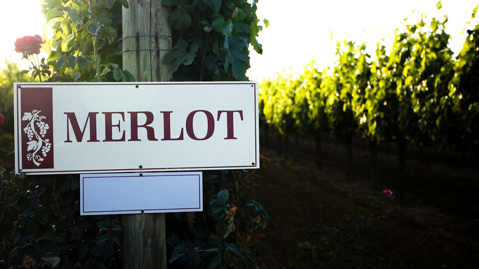 Big, Bold Reds—Cabernet Sauvignon and Merlot