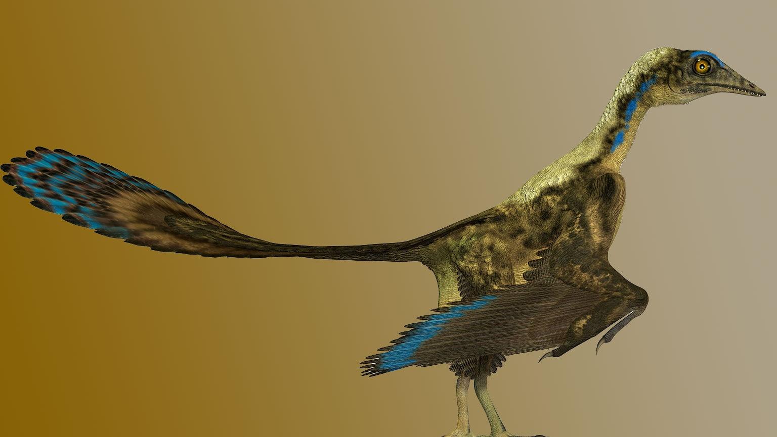 Birds—The Dinosaurs among Us