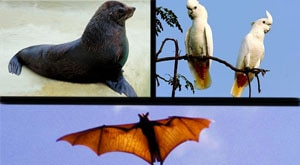 Image of Season 1 Episode 10 Rodrigues Fruit-Bats, Red-Vented Cockatoo and Hooker's Sea Lions
