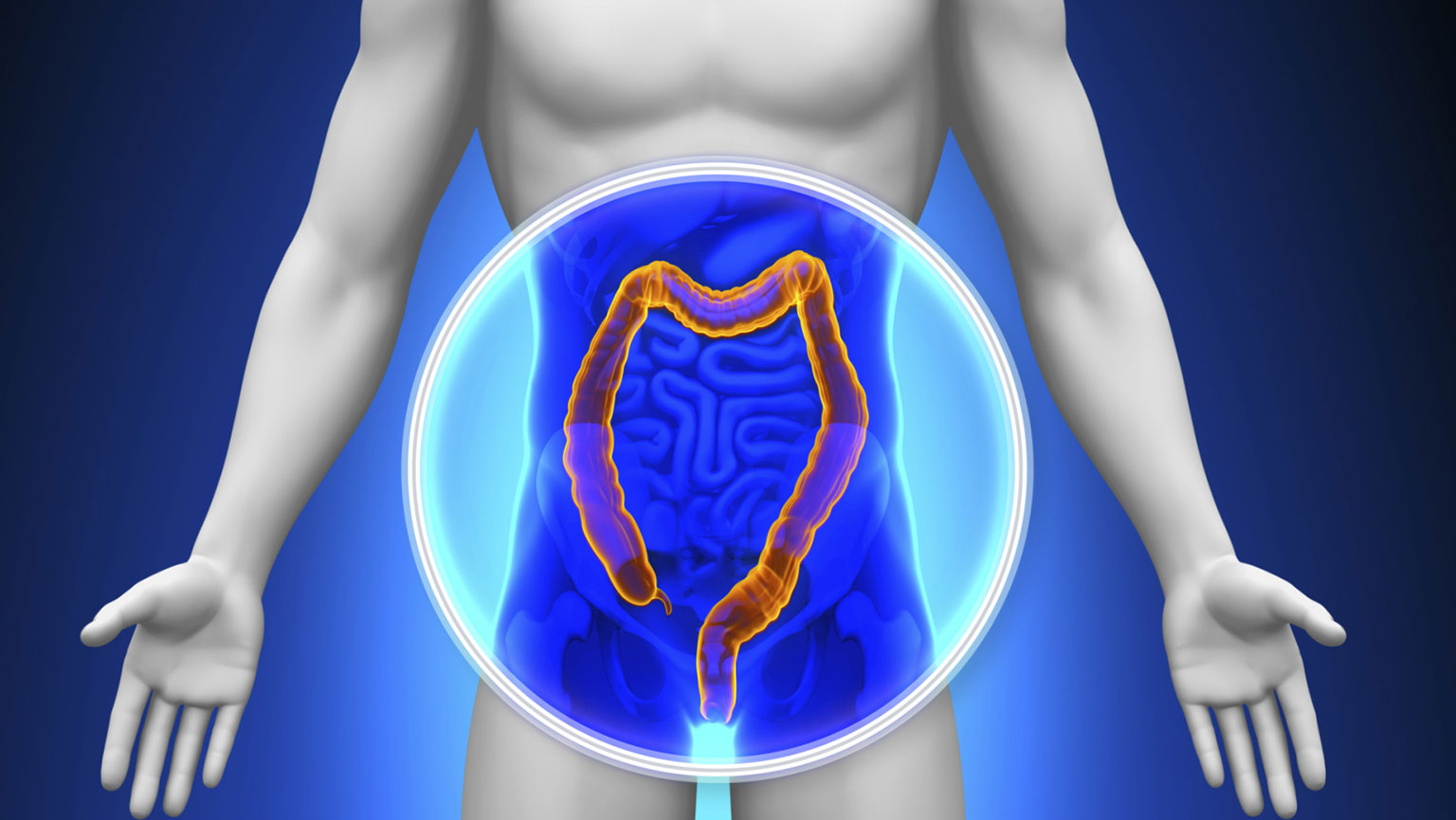 Digestive System—Physiology of the Small Intestine, Colon, and Rectum