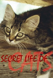 Image of The Secret Life of Cats