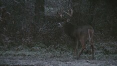 Murphy's Whitetail Law