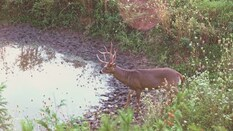Big Buck Waterholes