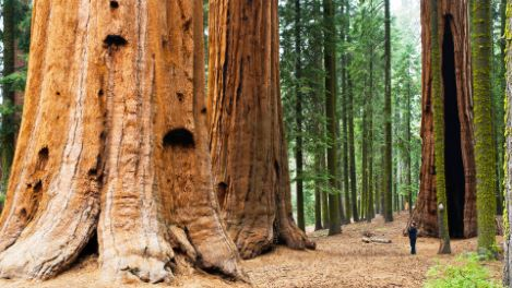 California's Coastal Redwood Parks