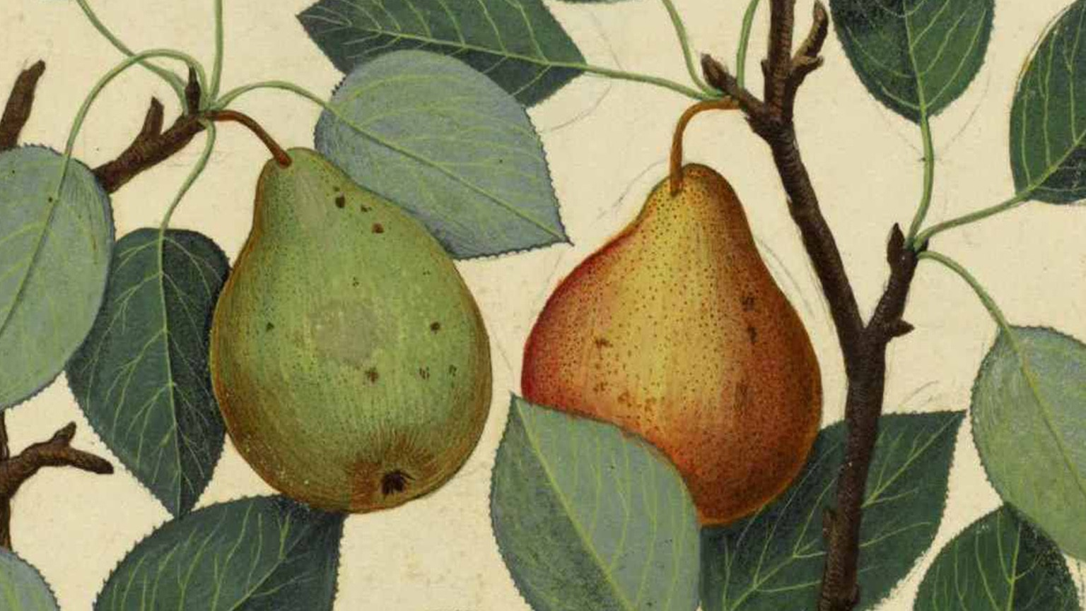 Book II—Stealing Pears: So What?
