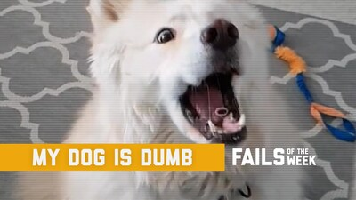 My Dog is Dumb: Fails of the Week (November 2019)