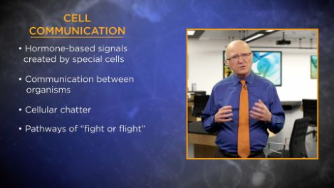 Hormones, Stress, and Cell Division
