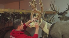 A Tribute to Deer Hunting