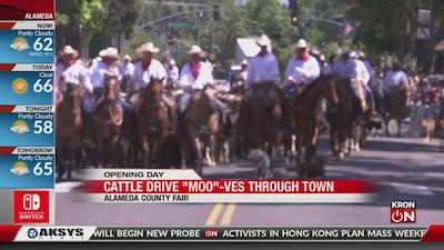 Cattle Drive Through Downtown Pleasanton