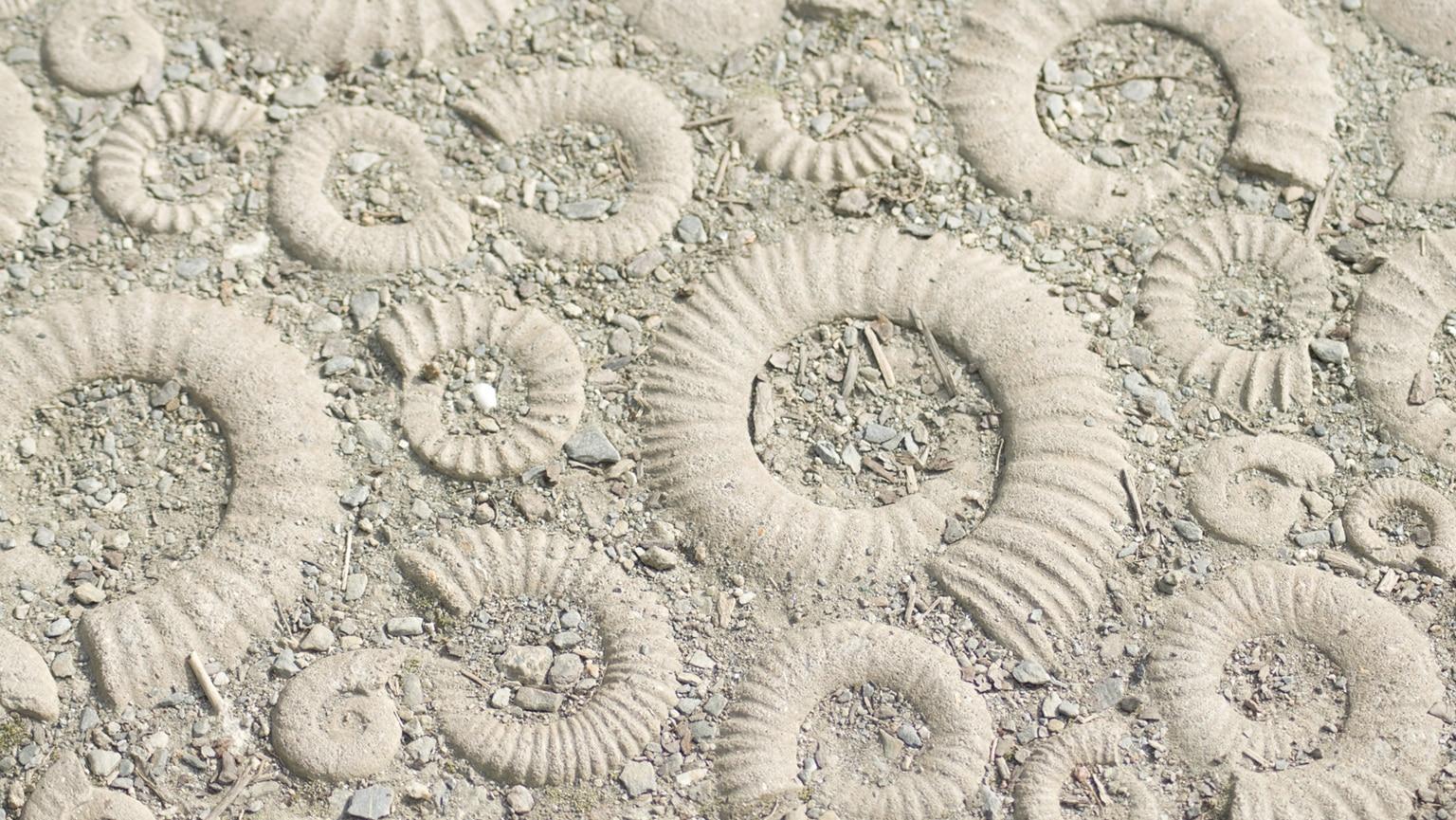 Monsters of the Deep—Mesozoic Oceans