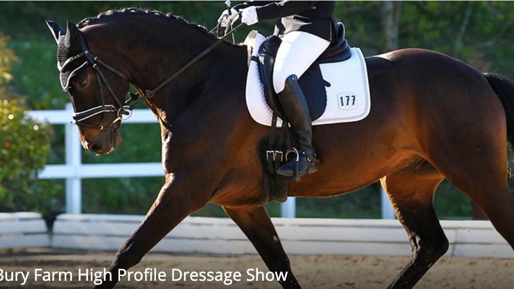 Bury Farm Equestrian Village High Profile Show 2020