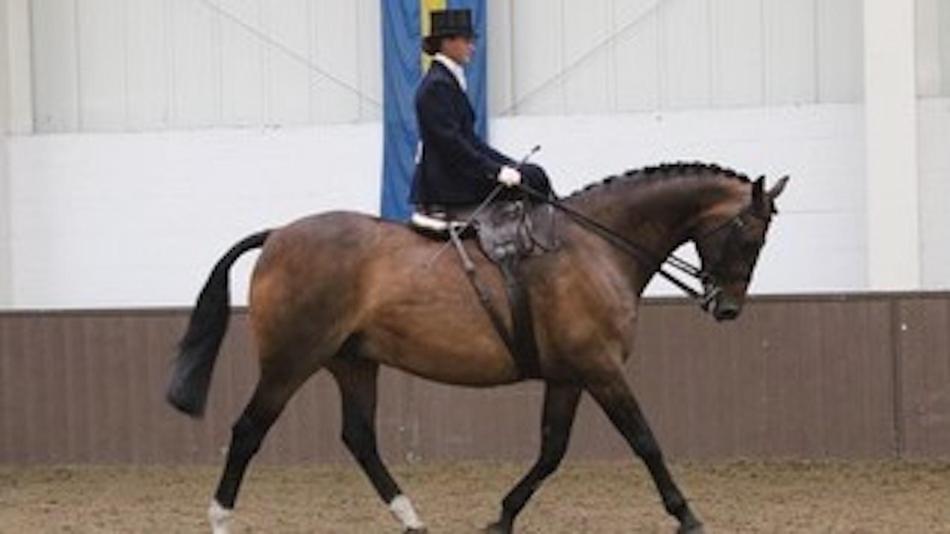 The National Side Saddle show 2021, Bury Farm