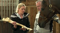 Vet Essentials: Joint Disease in Horses (S3E2)