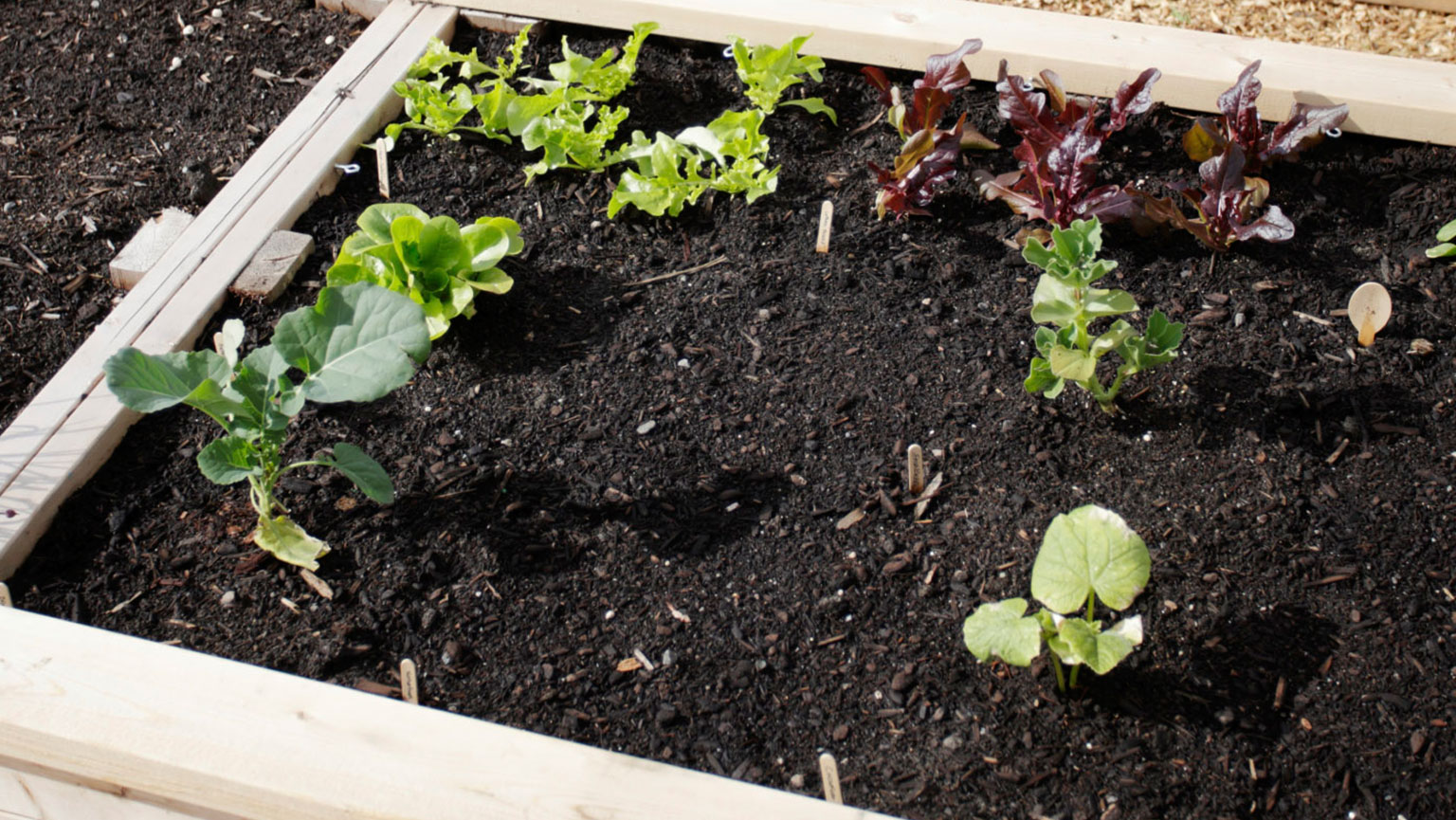 Building Your Garden Foundation