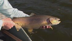 Stillwater Basics Fly Fishing