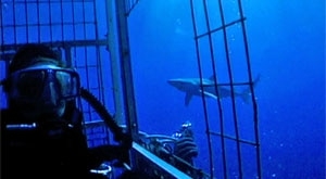 Image of Season 2 Episode 5 Ocean Adventures