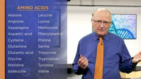 Amino Acids: 20 Building Blocks of Life